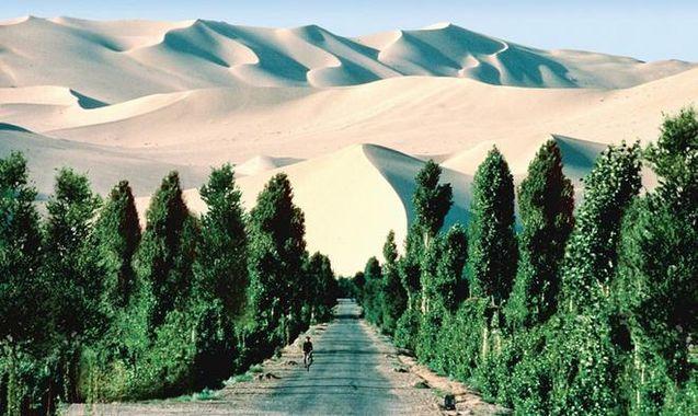 Des arbres dans le désert qui forme une muraille