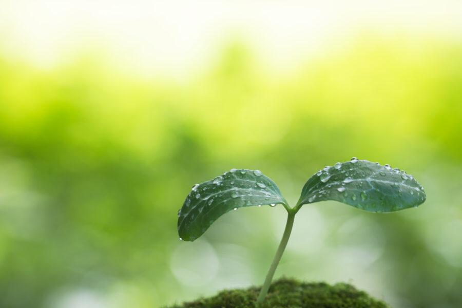 Premier BE spécialisé en valorisation des eaux de pluie